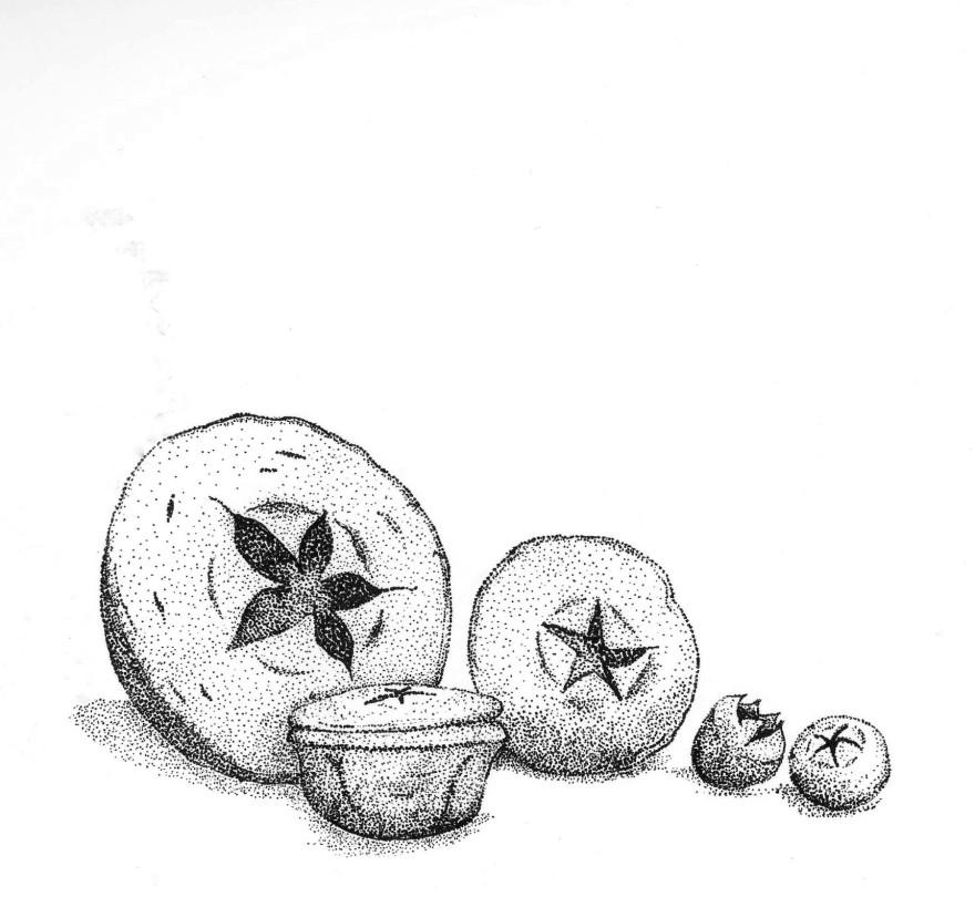 Gum nut star collection