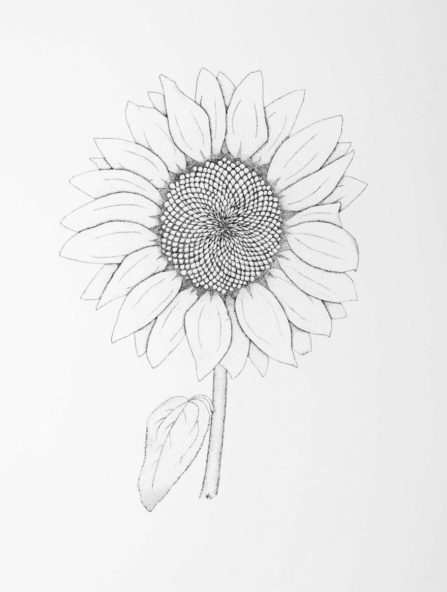 fibonaccis-flower-cropped